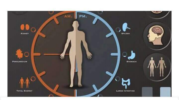 Photo of ما هي الساعة البيولوجية في جسم الإنسان