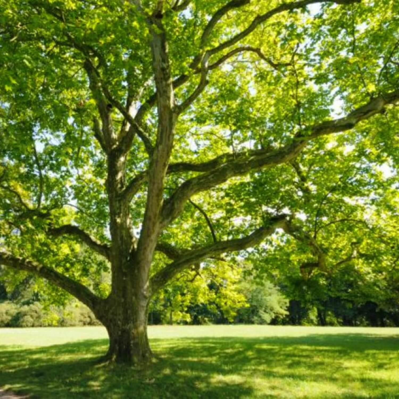 الاعشاب الطبيعية وفوائدها