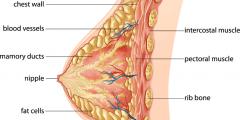 علاج امراض الثدي عند النساء