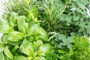 علاج مغص البطن بالاعشاب