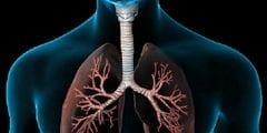 اين تقع الرئتين وما هي وظائف الرئتين في جسم الانسان ؟