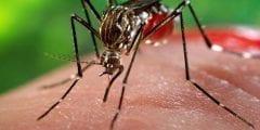 ماهو فيروس زيكا وأعراضه وطرق العلاج والوقاية