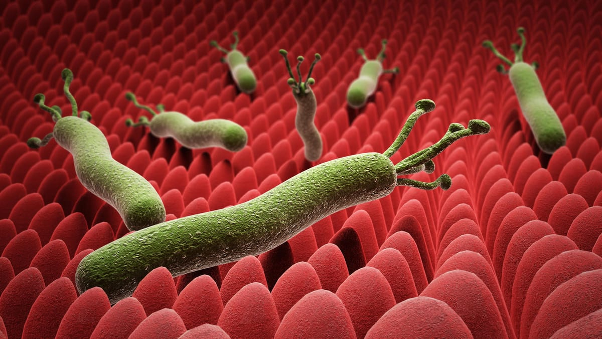 "Photo of ماهي البكتيريا المسببة لـ"" جرثومة المعدة "" وماهي أعراضها؟"