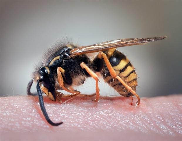 Photo of كييف تتعامل مع لدغات النحل .. التشخيص والعلاج
