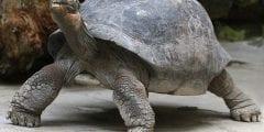 تعرف على الكائنات الأطول عمرًا على كوكب الأرض والتي لا تموت نهائيا