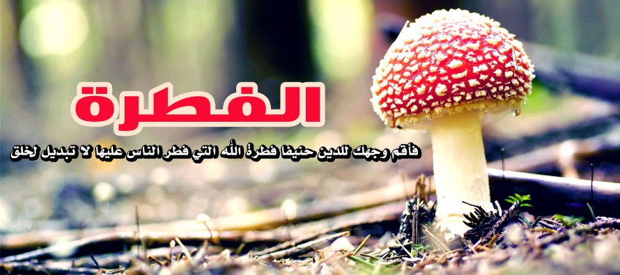 Photo of ما هي الفطرة وما هو الدليل عليها من القران