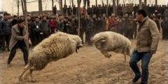 أغرب عادات عيد الأضحي حول العالم