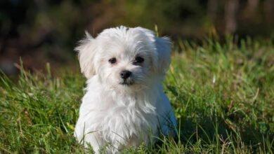 أجمل اسماء كلاب اناث ومعانيها 2020