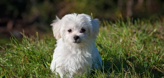 أجمل اسماء كلاب اناث (بنات) ومعانيها كلاب انثي بالعربي كيوت 2021