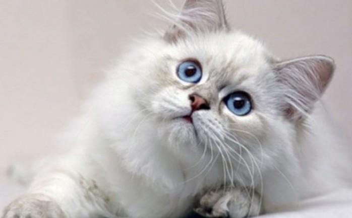 تفسير حلم قطة تهاجمني في المنام