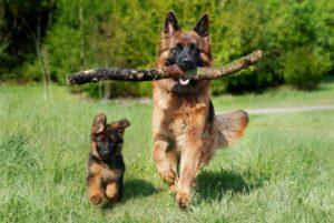 اسماء كلاب انثى