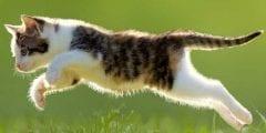 تفسير حلم قطة تهاجمني في المنام لكبار المفسرين