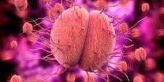 علاج السيلان بالثوم