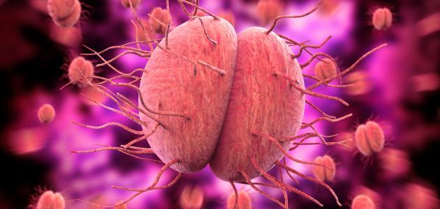 صورة علاج السيلان بالثوم وطرق انتقاله بين الزوجين