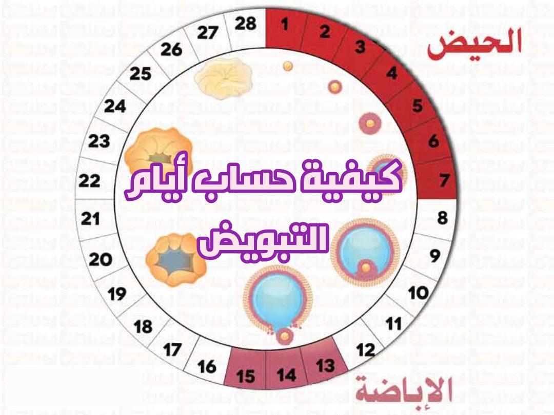 كيفية حساب أيام التبويض للحمل بولد نادي العرب