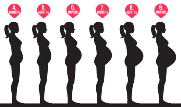 شكل البطن في الشهر الرابع 13