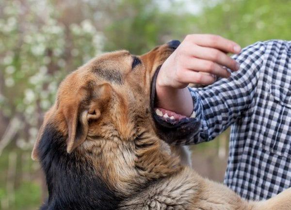 عضة الكلب في المنام | تفسير رؤية الكلاب تلاحقني في المنام